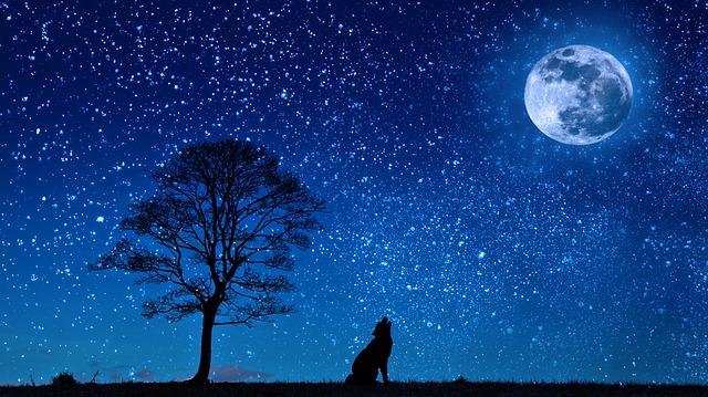 【緊急のお知らせ!】今日12/14は「ふたご座流星群」が超絶ピークらしい!