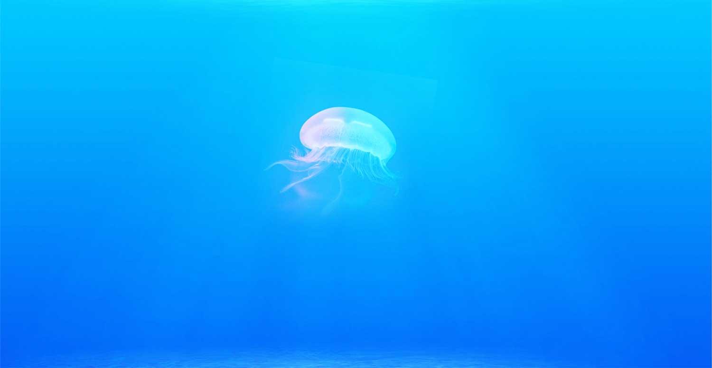 海水浴でクラゲがいた時の絶望感は異常。【クラゲの種類と対処法。】