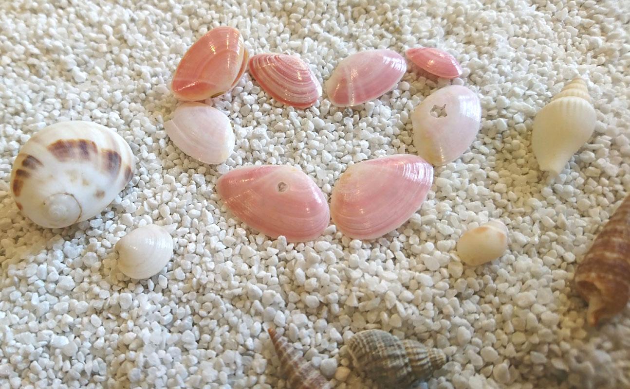 ビーチコーミング 桜貝