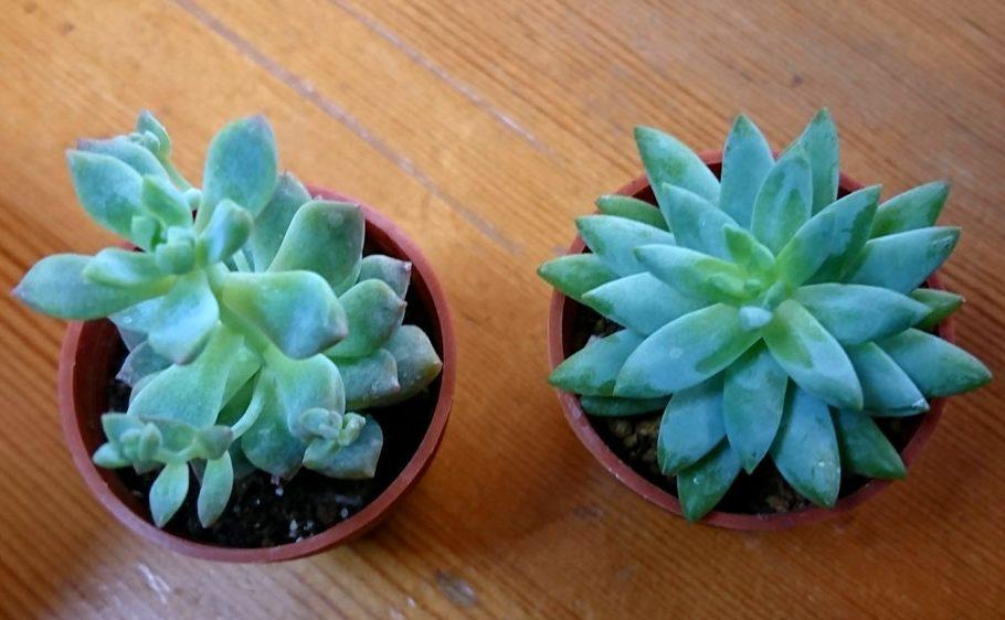 奇跡!枯らせることなく育てられてる植物たち